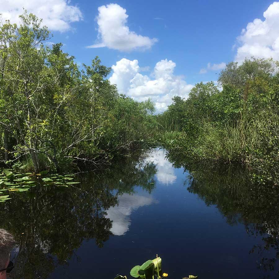 everglades-swamp-miami