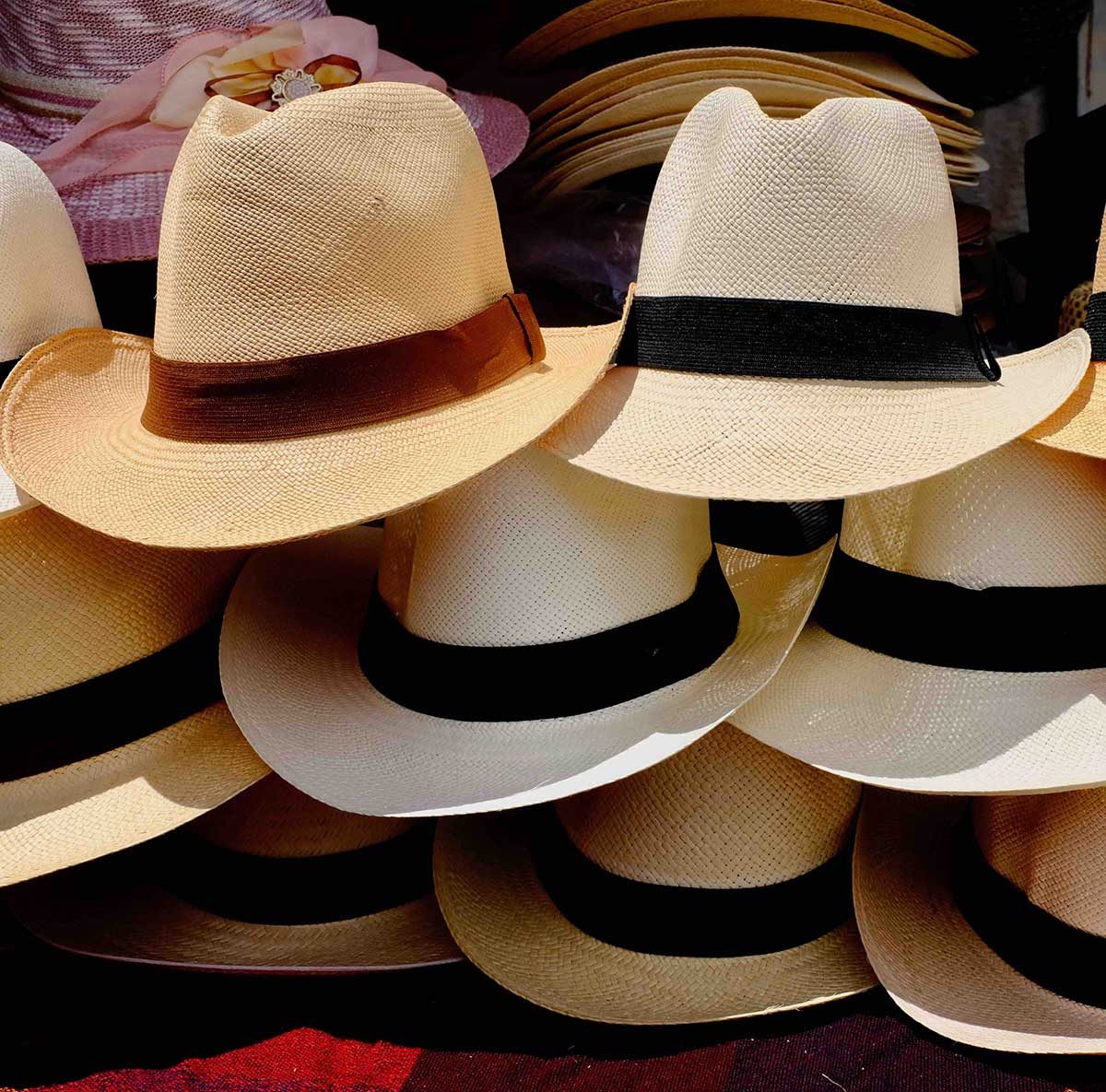 5e7cab63 Carludovica Palmata, or the Torquilla Palm, is the scientific name for the  plant used to weave the world famous Panama hats. Why are they called Panama  hats ...