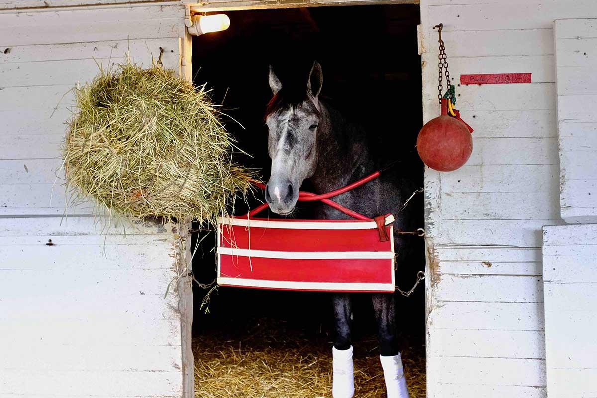 kentucky-horse.jpg